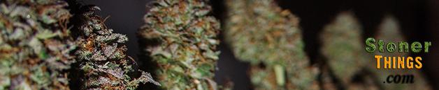Medical Marijuana Zoning