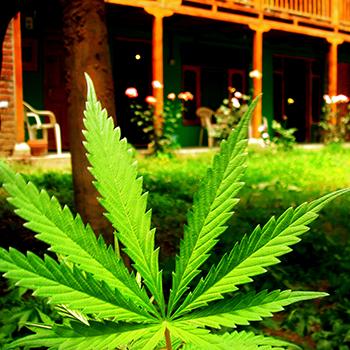 Vermont Decriminializes Marijuana