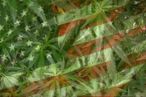 american flag and weed