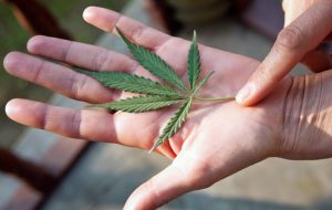 marijuana-leaf-in-hand
