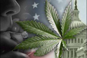 washington_dc_ marijuana