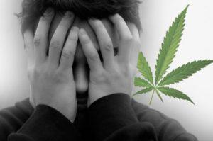 Marijuana Schizophrenia
