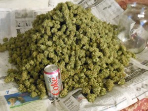 pile of weed diet coke