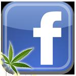 facebook logo marijuana