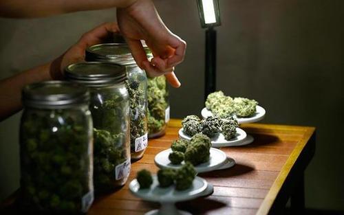 jars of marijuana