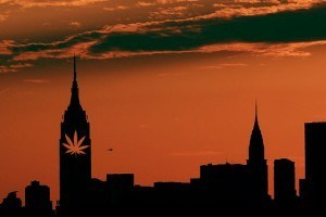 new york weed
