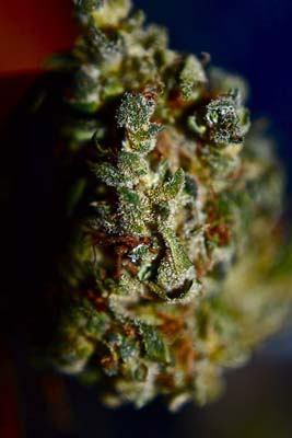 close up weed