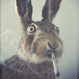 bunny smoking joint