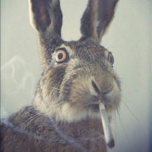 bunny smoking joint