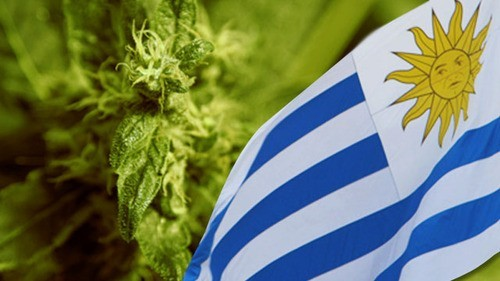 uruguay flag marijuana
