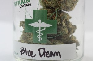 Blue Dream Strain Contain