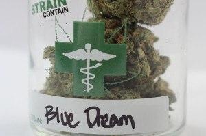 Blue Dream Strain Contain