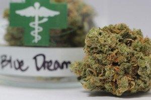 Blue Dream Strain Contain2