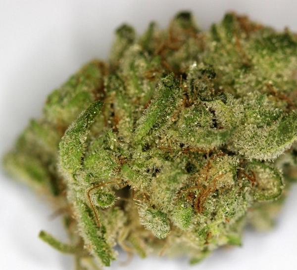 Kush Weed Strains