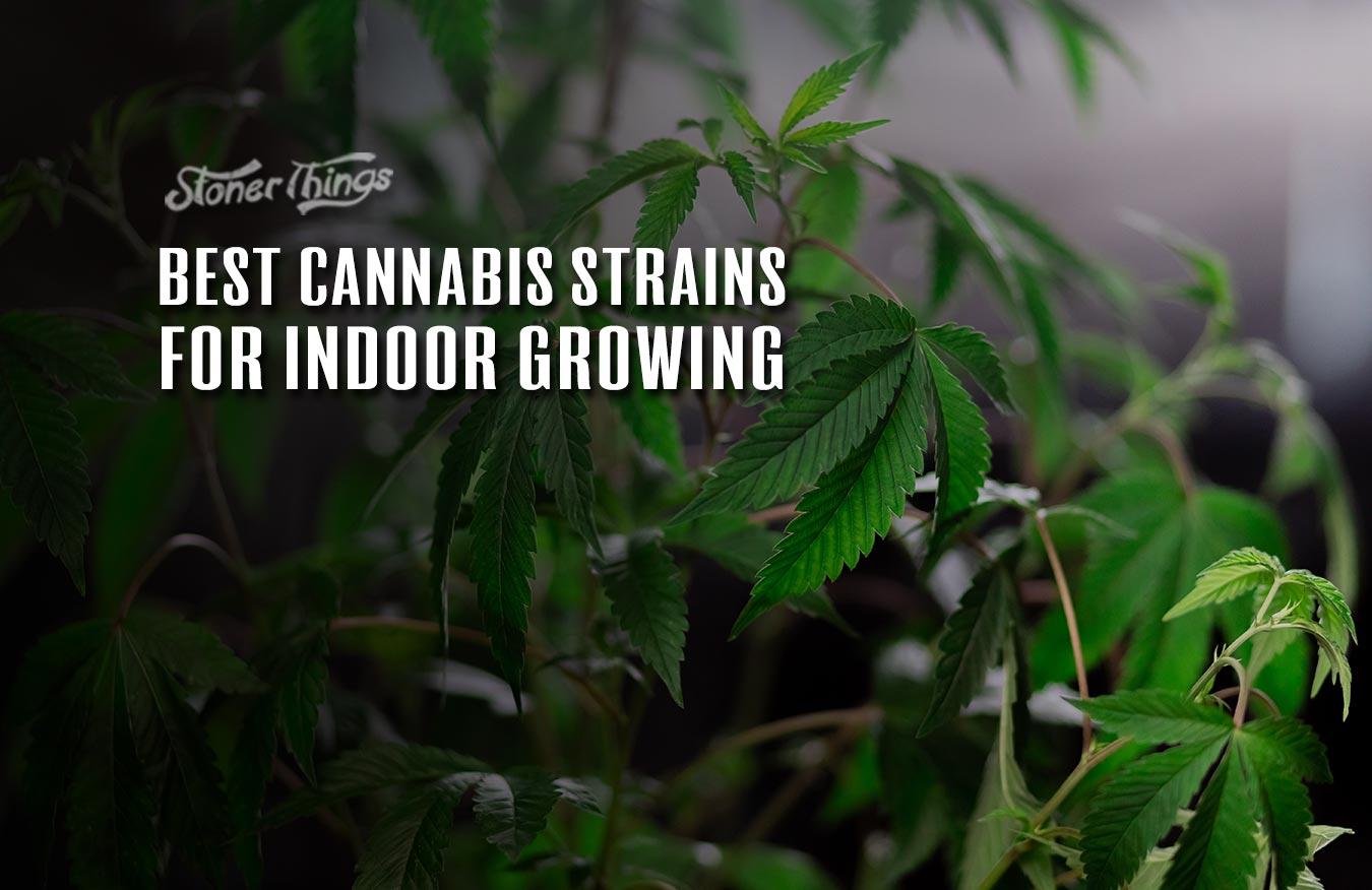 best cannabis strains indoor growing