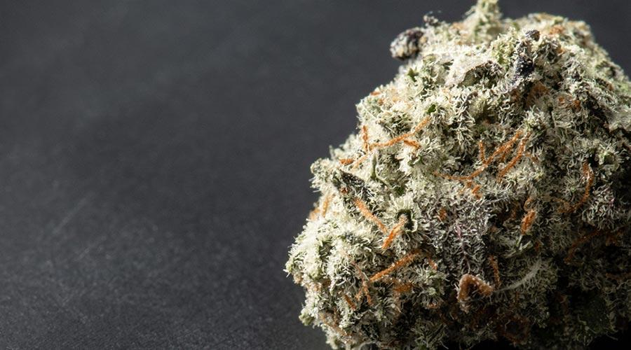 best marijuana strain indoor growing