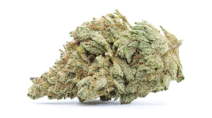 best strains for outdoor grows