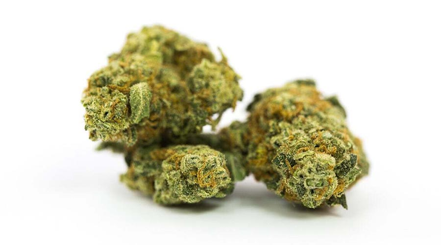 best strains to grow outdoors