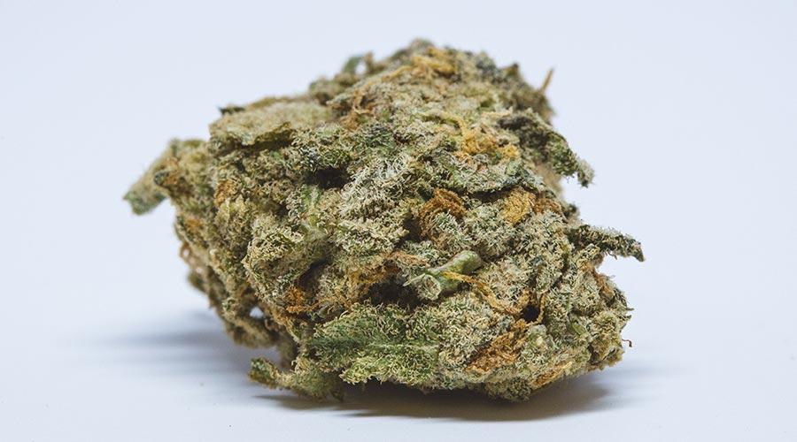best weed strain for indoor grows