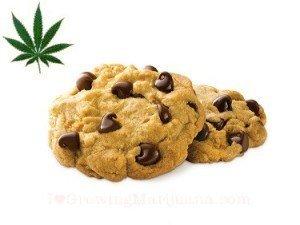 Marijuana chocolate chip cookies