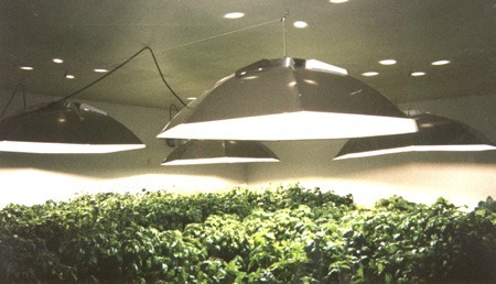 HID grow lights