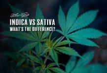 Indica vs Sativa Cannabis Strains