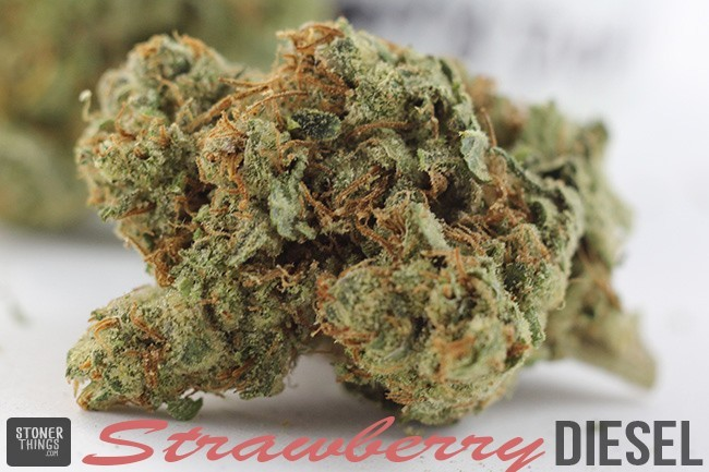 weed hookup brisbane Your guide for brisbane compiled and published by those who love it and know it best quest guide 2015 semester 1 / 2015 your comprehensive guide to brisbane and surrounds social - entertainment - culture - exchange - fun - travel - study.