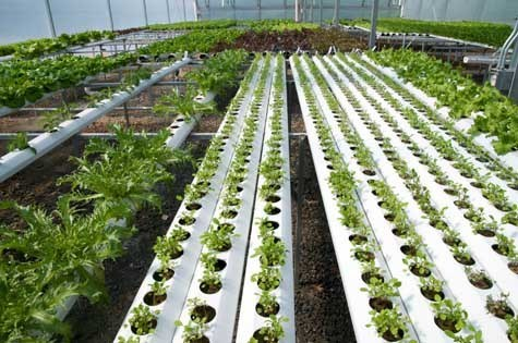 Hydroponics equipment and Supplies