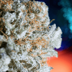 5 Best Strains To Take Right Before Bed