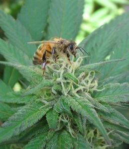 Weed Bee