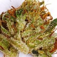 Weed Wednesday – 9/10