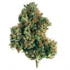 Weed Wednesday – 9/17