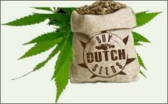 buy dutch seeds logo