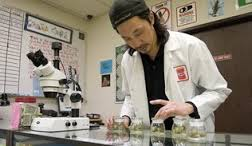 Marijuana Scientist