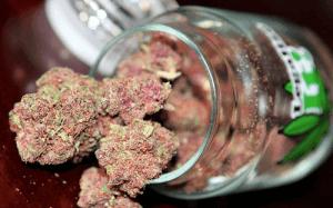 Those pink buds look soooo delicious.