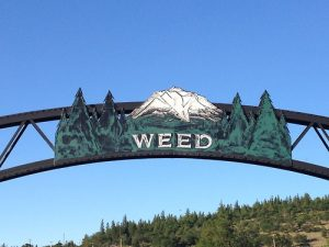 brb, I'll be in Weed