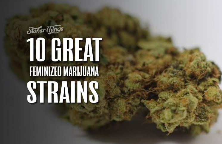 Feminized Marijuana Strains