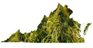 Virginia Marijuana Map