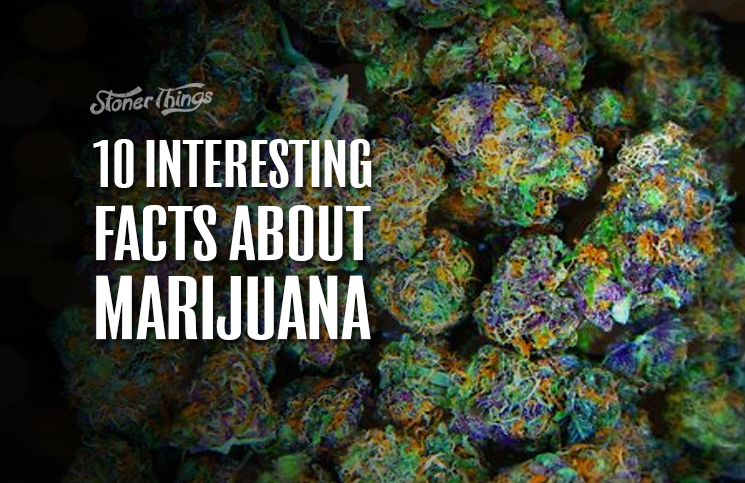 interesting facts about weed