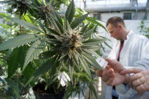 Marijuana Scientists