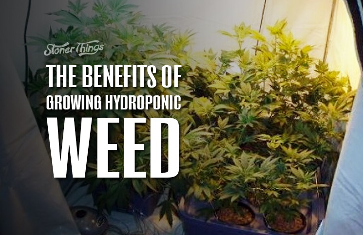 the benefits of growing hydroponic weed