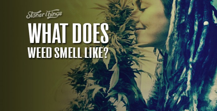 What-Does-Weed-Smell-Like