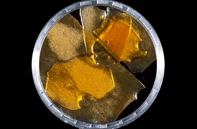 1st Place - Tangie #17 - Gold Coast Extracts