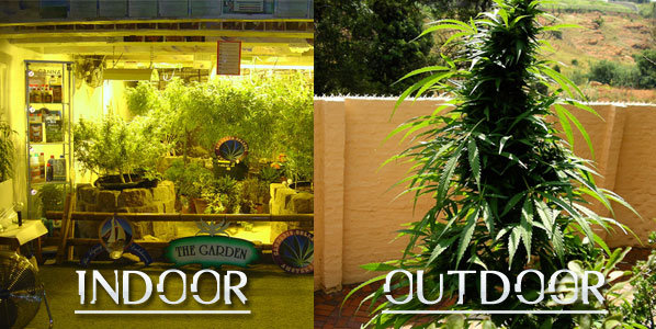 de483f9d253 Growing Cannabis  Indoors Vs. Outdoors - Stoner Things