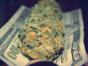 Marijuana Money