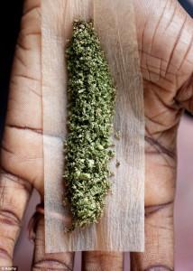 Indian Marijuana