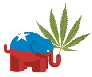 Republican Elephant Marijuana
