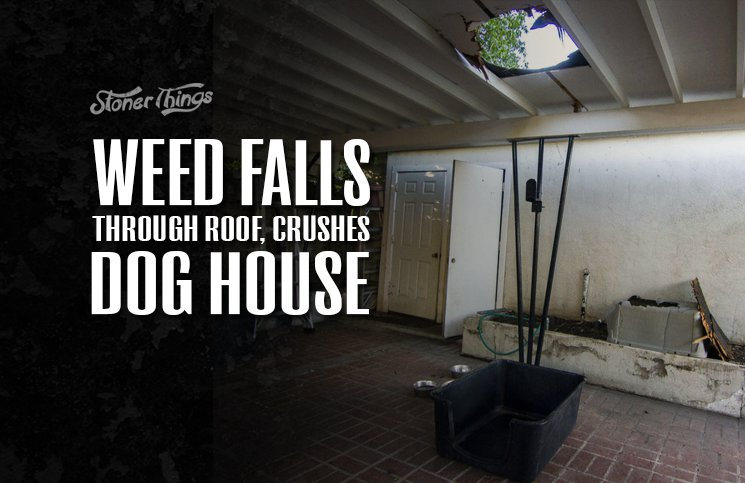 Weed Falls Through Roof Crushes Dog House Stoner Things