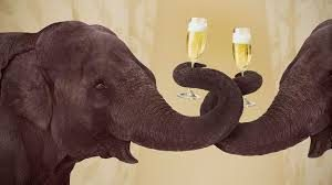 Drinking Elephants