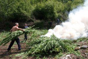 Albanian Police Destroying Marijuana